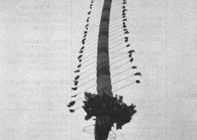 1988-Grand-Champion-Elmer-Wharton-Centipede