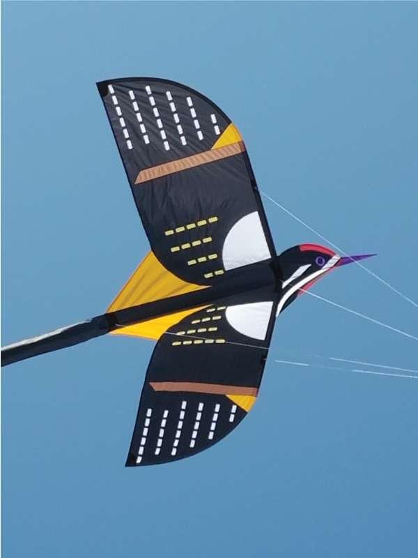 figure-kites-bird